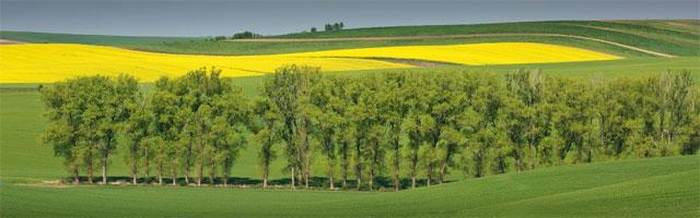 Пейзаж Южной Моравии