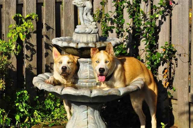 смешные собаки на фонтане