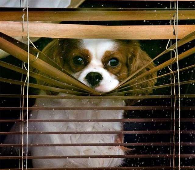 Собака наблюдает