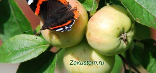 Бабочка на яблоке в саду
