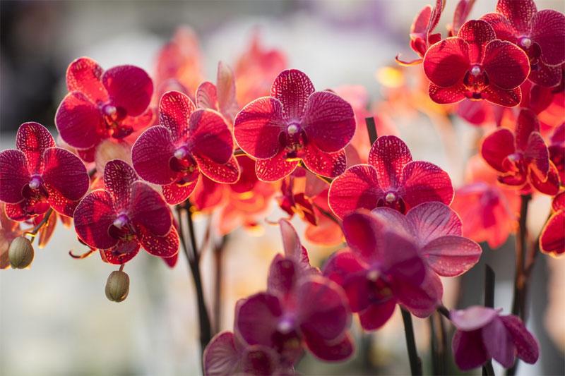 Орхидеи - выращивание уход размножение