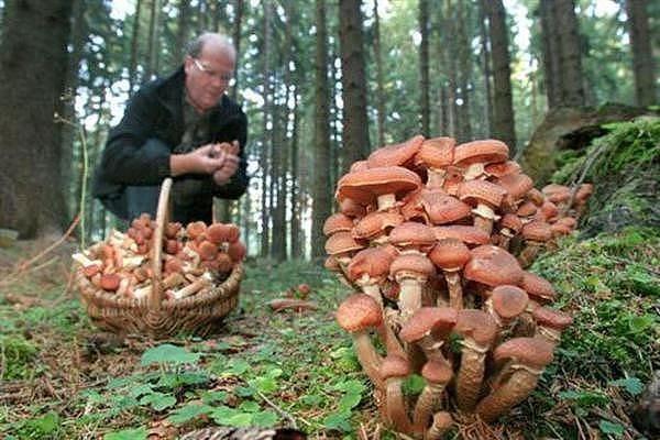 Опытные грибники