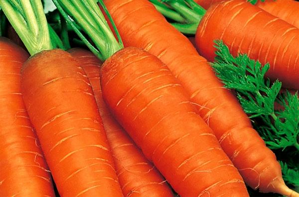 Сорта моркови и выбор семян