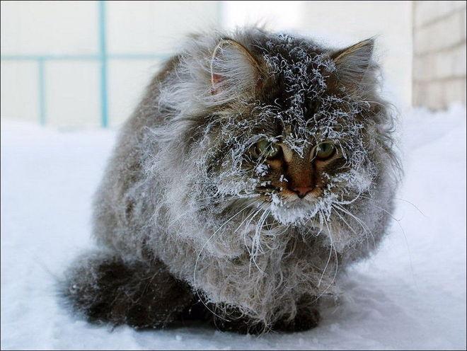 Оставленные кошки и коты на дачах