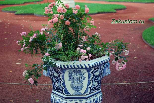 Цветы в вазоне в саду