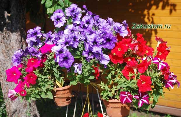контейнерное садоводство
