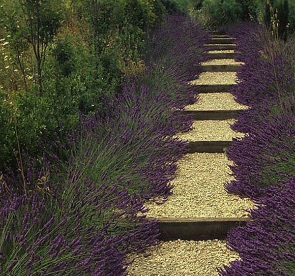 Садовая дорожка из гравия как элемент ландшафтного дизайна