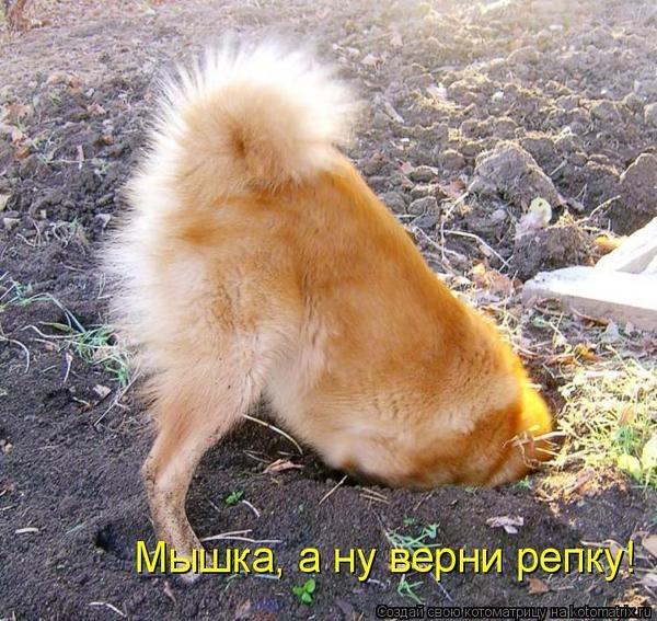 Как отучить собаку копать ямы