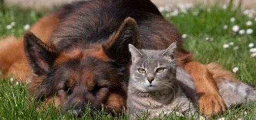 Животные на даче