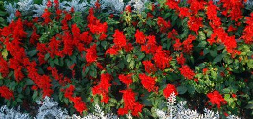 Яркий цветник