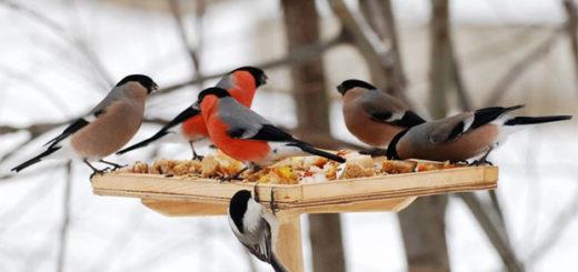 Кормим птиц зимой