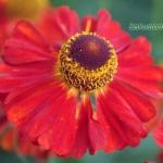 Цветы для тени