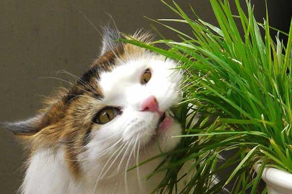 Лекарственные травы для животных