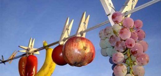 Сушка овощей фруктов и ягод