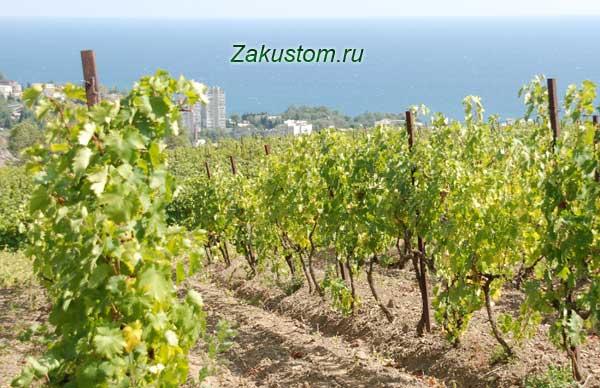 Крымский виноградник