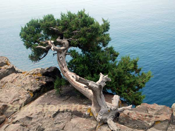 "Скала у дворца ""Утес"" - прекрасная природа Крыма"