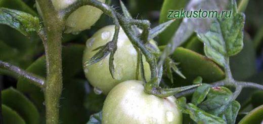 Выращивание томатов на даче