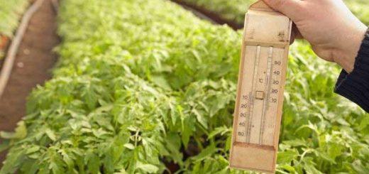 Температура в теплице для растений