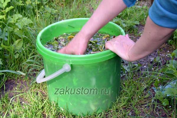 Как приготовить настой из одуванчиков от болезней и вредителей сада и огорода