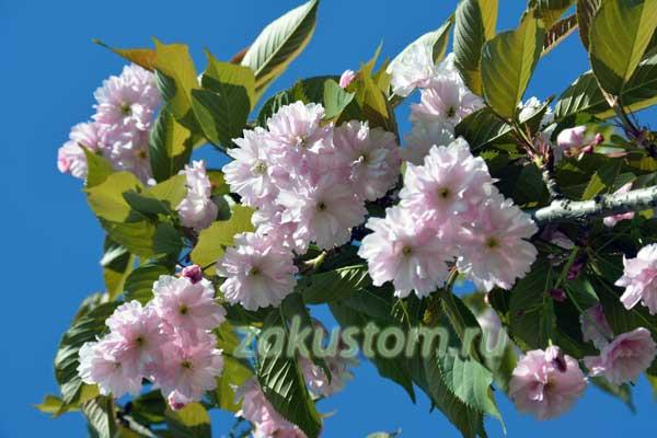 Цветущий сад - красота природы