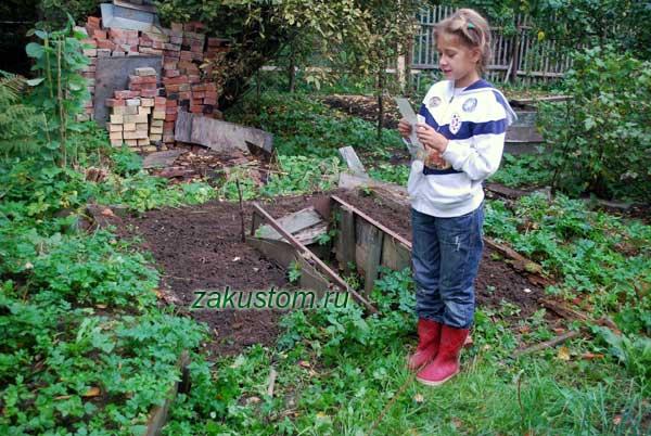 Работы в саду и огороде в сентябре