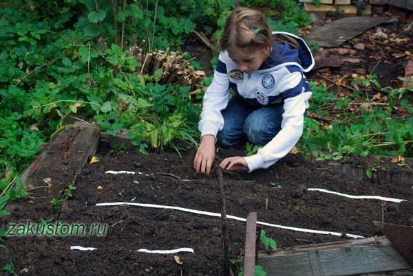 Работы на огороде в сентябре