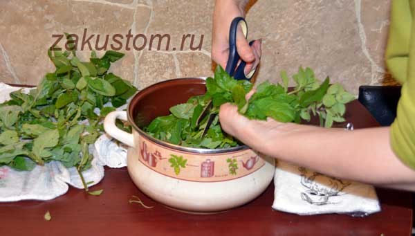 Как приготовить мятный сироп в домашних условиях