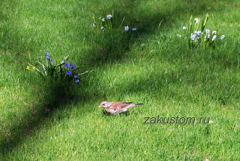 Птичка на газоне