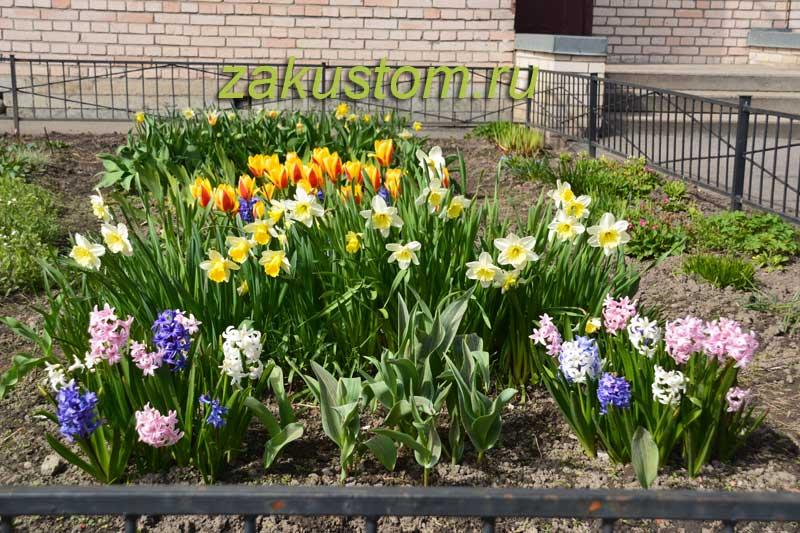 Цветочная клумба луковичных - тюльпаны, нарциссы, гиацинты