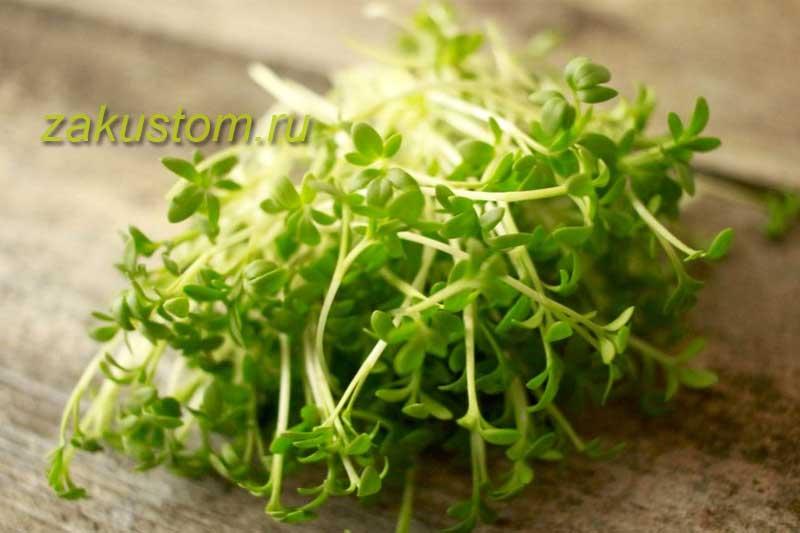 Польза кресс-салата и применение в кулинарии