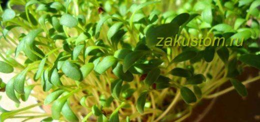 Выращивание кресс-салата дома