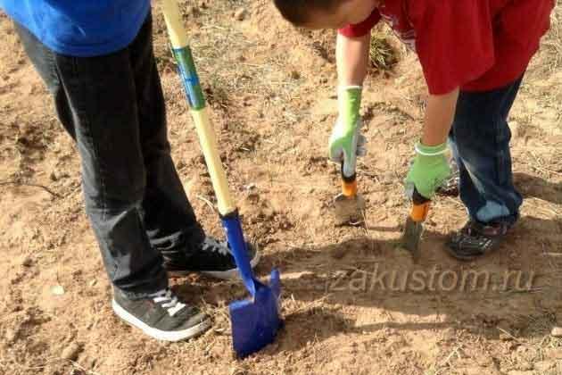 Как улучшить песчаную почву: подготовка под сад и огород